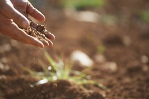 soil-1062912_1920